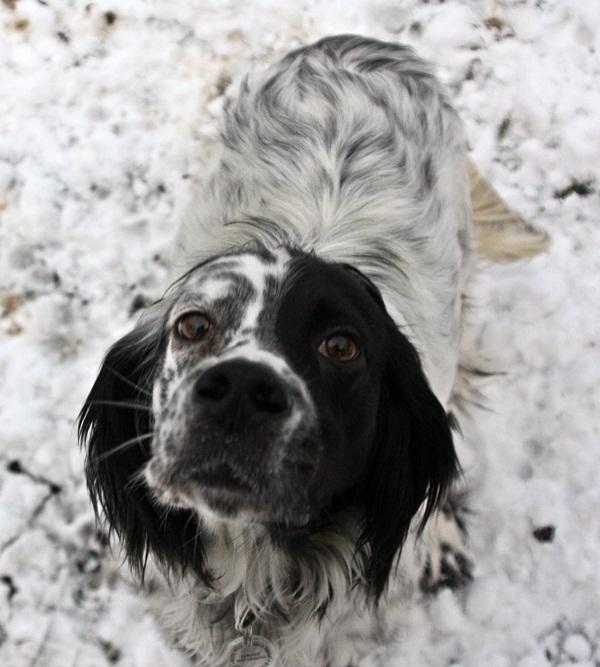 Bildertagebuch - Ginger lebt jetzt als Dauerpflegehund bei ihrer Pflegefamilie 13730314ls