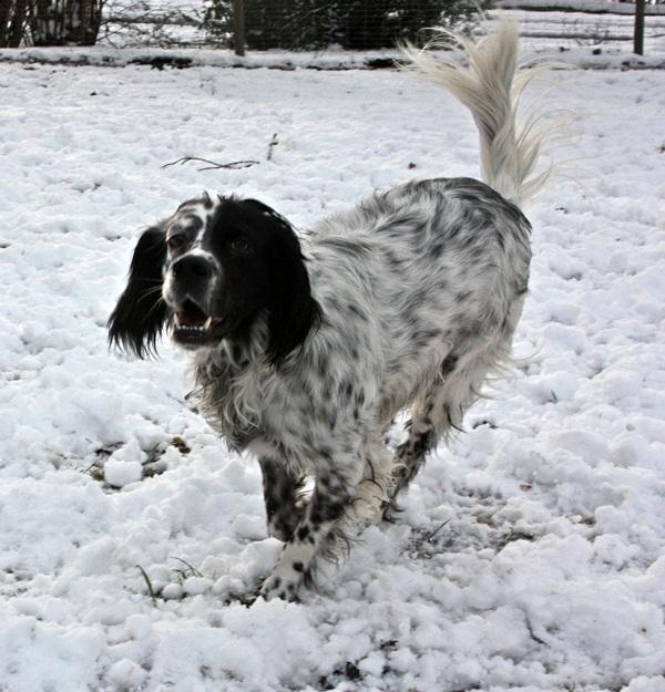 Bildertagebuch - Ginger lebt jetzt als Dauerpflegehund bei ihrer Pflegefamilie 13730316kq