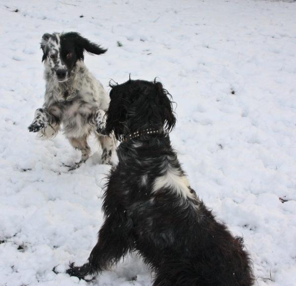 Bildertagebuch - Ginger lebt jetzt als Dauerpflegehund bei ihrer Pflegefamilie 13730317dd