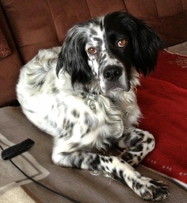 Bildertagebuch - Ginger lebt jetzt als Dauerpflegehund bei ihrer Pflegefamilie 13730318om