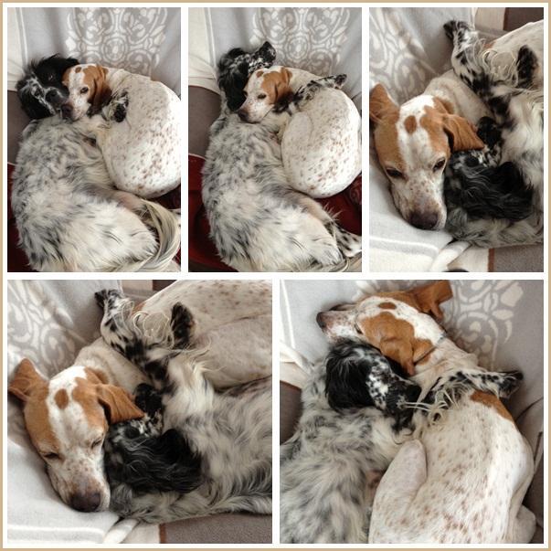 Bildertagebuch - Ginger lebt jetzt als Dauerpflegehund bei ihrer Pflegefamilie 13730320lp