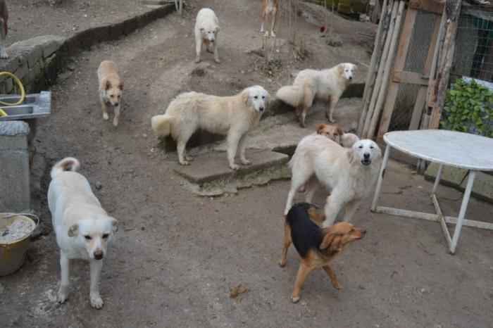 Es war einmal....Hunde aus Italien brauchen wieder unsere Hilfe 13762120bu