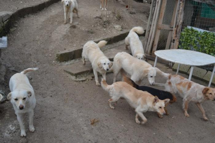 Es war einmal....Hunde aus Italien brauchen wieder unsere Hilfe 13762121ga