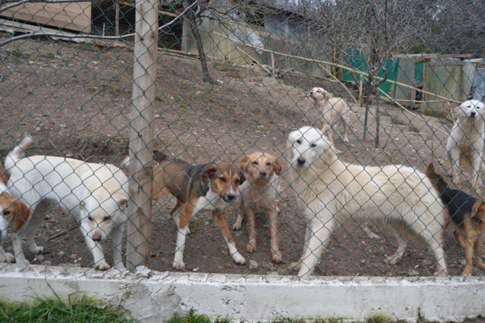 Es war einmal....Hunde aus Italien brauchen wieder unsere Hilfe 13762123ex