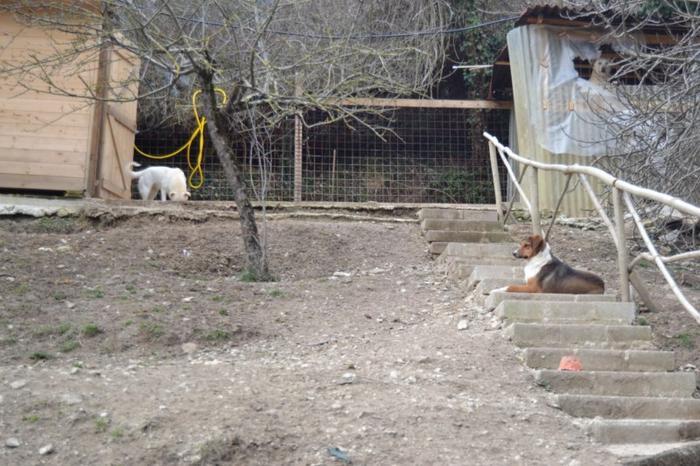 Es war einmal....Hunde aus Italien brauchen wieder unsere Hilfe 13762124kq