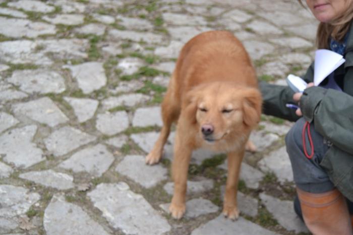 Es war einmal....Hunde aus Italien brauchen wieder unsere Hilfe 13762161yx