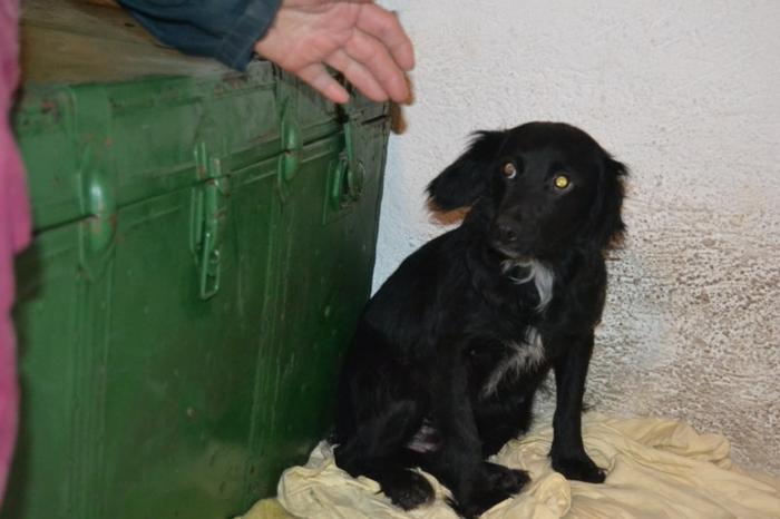 Es war einmal....Hunde aus Italien brauchen wieder unsere Hilfe 13762162ic