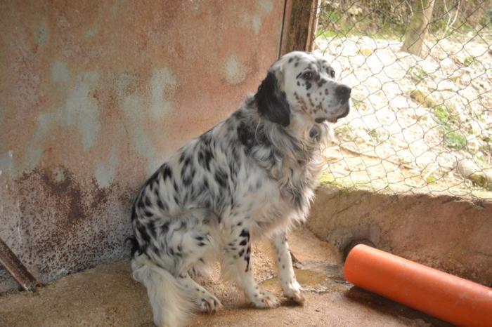 Es war einmal....Hunde aus Italien brauchen wieder unsere Hilfe 13762164sn