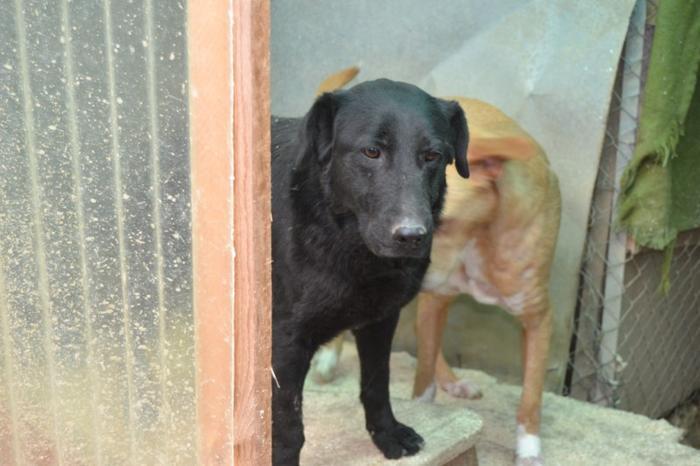 Es war einmal....Hunde aus Italien brauchen wieder unsere Hilfe 13762165fg