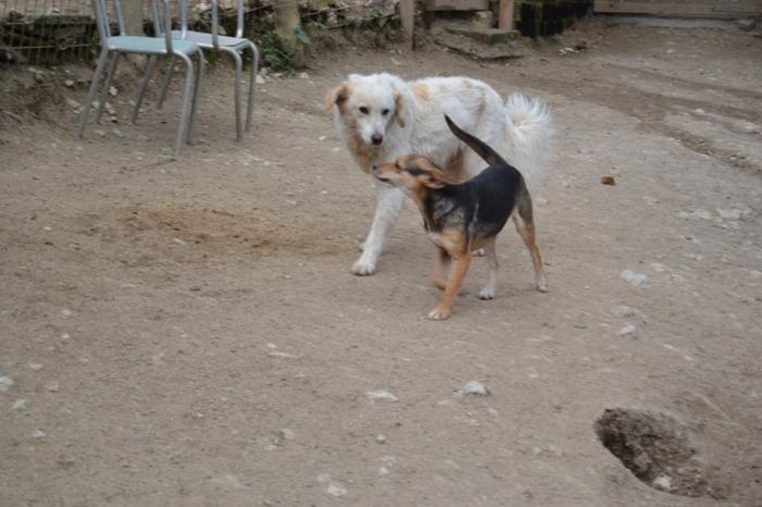 Es war einmal....Hunde aus Italien brauchen wieder unsere Hilfe 13762166yo