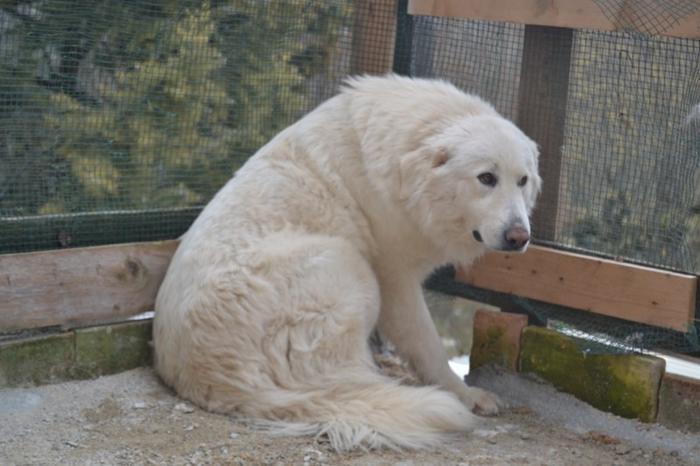 Es war einmal....Hunde aus Italien brauchen wieder unsere Hilfe 13762167eh