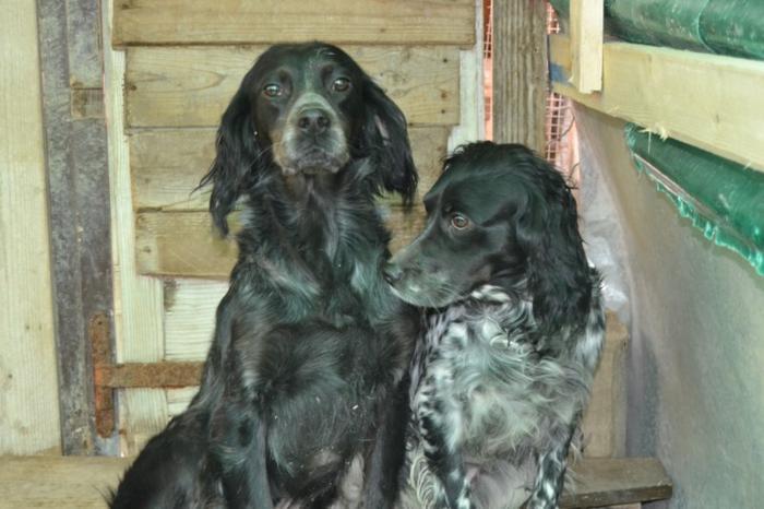 Es war einmal....Hunde aus Italien brauchen wieder unsere Hilfe 13762169et