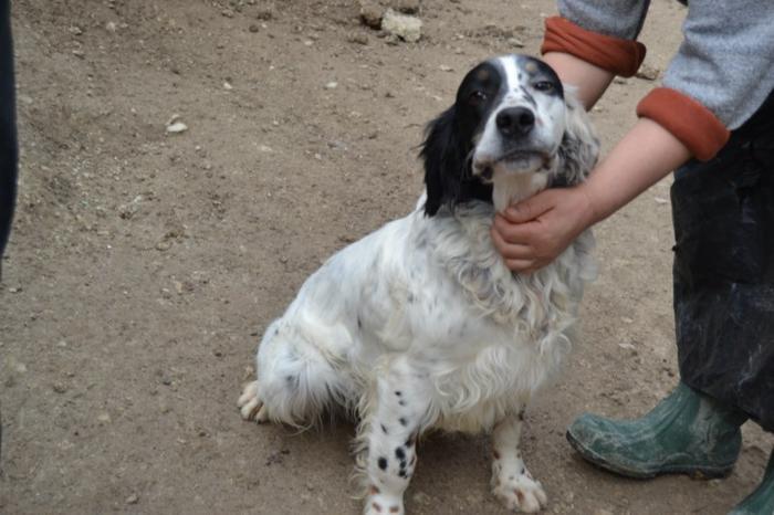 Es war einmal....Hunde aus Italien brauchen wieder unsere Hilfe 13762170aq