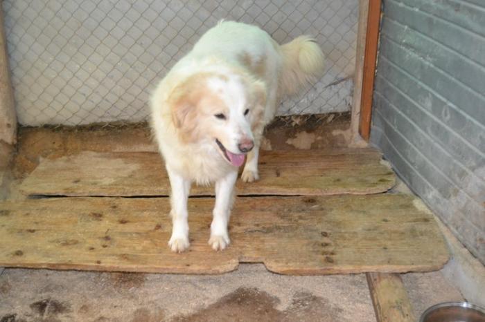 Es war einmal....Hunde aus Italien brauchen wieder unsere Hilfe 13762171yn