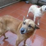Hunde aus Italien suchen dringend Plätze!!! Ein ganzes Leben im Canile! - Seite 17 13806162fr