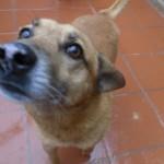 Hunde aus Italien suchen dringend Plätze!!! Ein ganzes Leben im Canile! - Seite 17 13806166lz