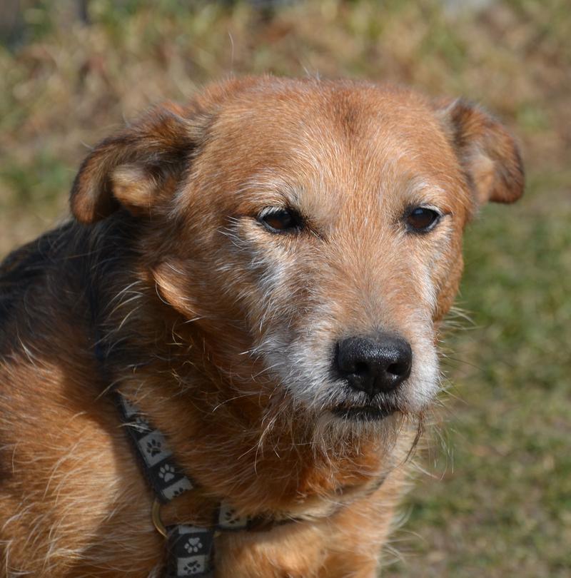 Jack - Hundeopa - Terrier - knapp 14 Jahre - Seite 2 13900605zo