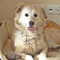 Hunde aus Italien suchen dringend Plätze!!! Ein ganzes Leben im Canile! - Seite 17 13913294yy