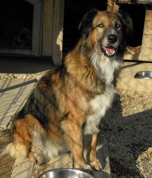 Hunde, die in Italien keine Zukunft haben 14023074rg