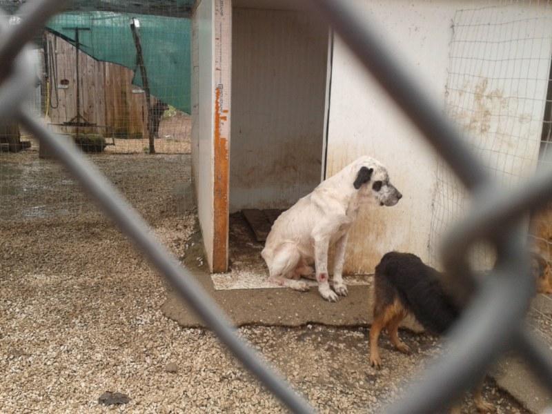 Hunde in Italien - ein ganzes Leben im Canile 14250049ah