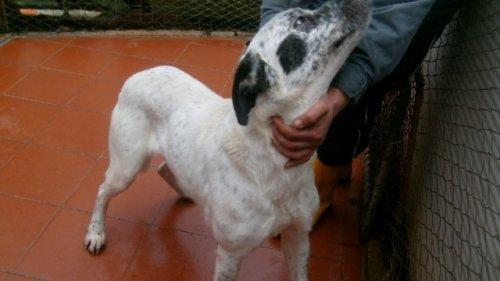 Hunde in Italien - ein ganzes Leben im Canile 14250592gf