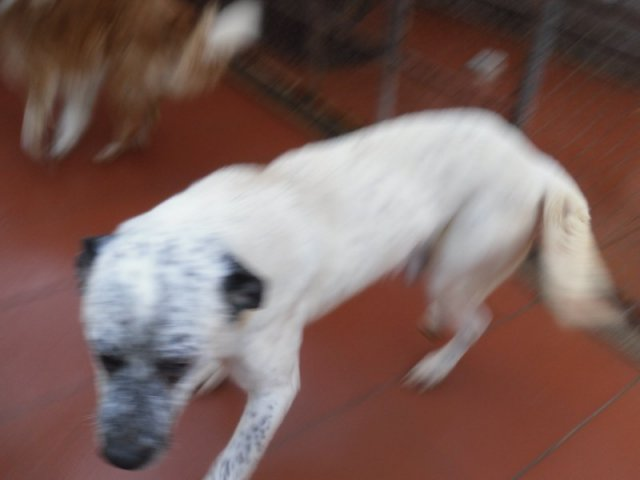 Hunde in Italien - ein ganzes Leben im Canile 14251014il