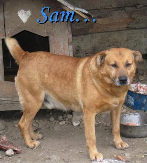 Sam..und er wartet immer noch... der gute alte Sam im Asyl Spas in Varazdin/Kroatien 14269974uj