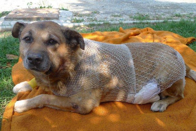 Sam..und er wartet immer noch... der gute alte Sam im Asyl Spas in Varazdin/Kroatien 14269978hv
