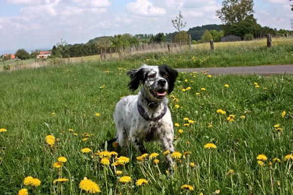Bildertagebuch - Ginger lebt jetzt als Dauerpflegehund bei ihrer Pflegefamilie 14510970ho
