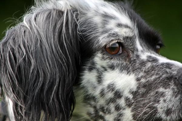 Bildertagebuch - Ginger lebt jetzt als Dauerpflegehund bei ihrer Pflegefamilie 14510974it