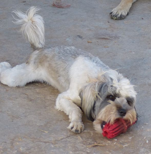 Bildertagebuch - Boy, kleiner Ball-Liebhaber sucht Familie... - in Griechenland VERMITTELT! 14563779me
