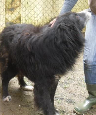 Hunde in Italien - ein ganzes Leben im Canile 14975719py