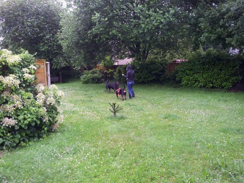 Bruna nun Bella ist in ihrem Zuhause angekommen 15043082qz