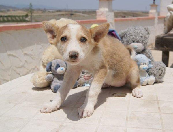 Bildertagebuch - Annie, kleine Zaubermaus... - in Spanien VERMITTELT! 15059268zv