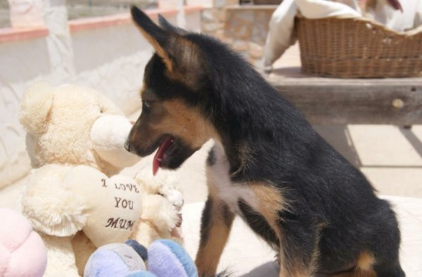 Bildertagebuch - Toyha, süße kleine Maus... - in Spanien VERMITTELT! 15059321mk