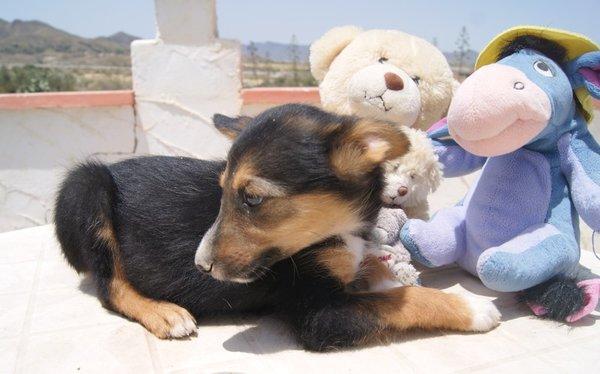 Bildertagebuch - Toyha, süße kleine Maus... - in Spanien VERMITTELT! 15059322rs