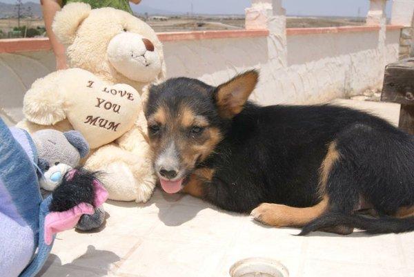 Bildertagebuch - Toyha, süße kleine Maus... - in Spanien VERMITTELT! 15059328qs
