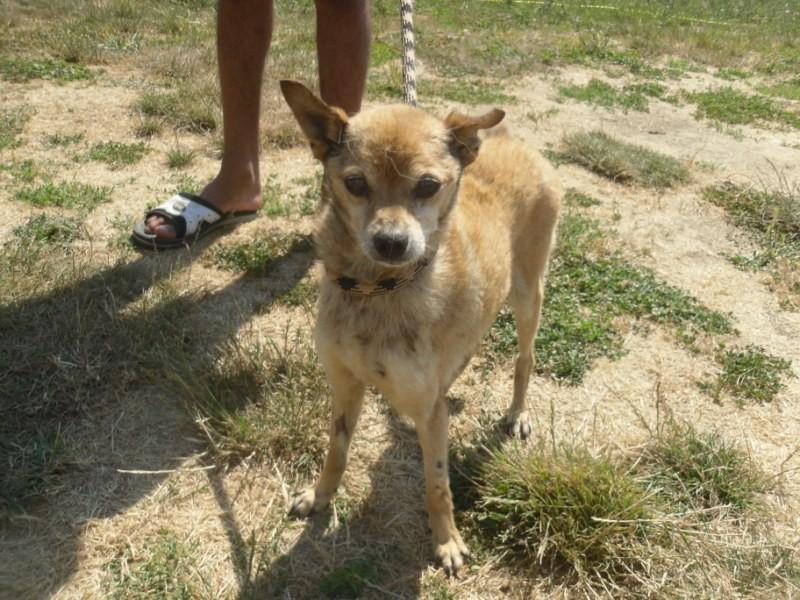 Hunde in Italien - ein ganzes Leben im Canile 15192976zg
