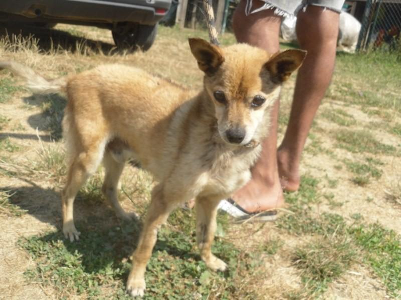 Hunde in Italien - ein ganzes Leben im Canile 15192981zk