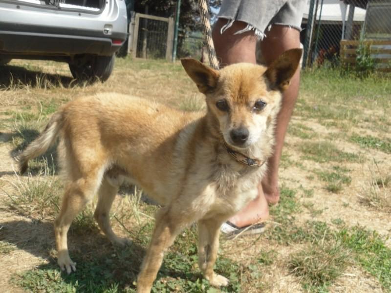 Hunde in Italien - ein ganzes Leben im Canile 15192982ff