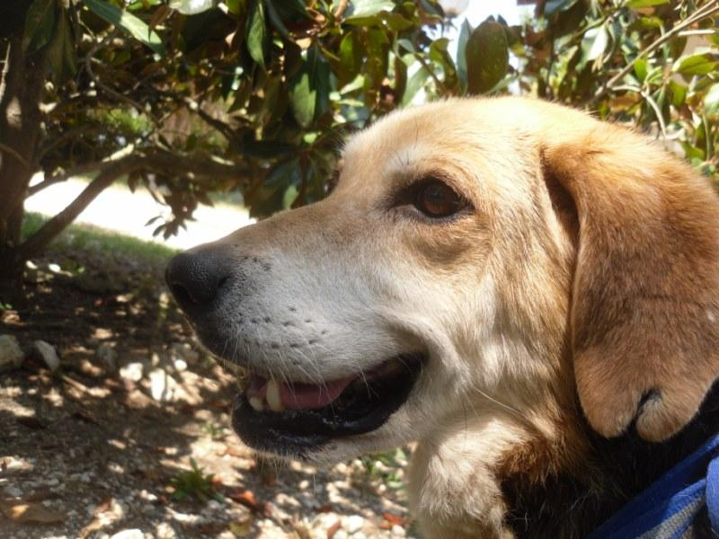 Hunde in Italien - ein ganzes Leben im Canile 15221940ys