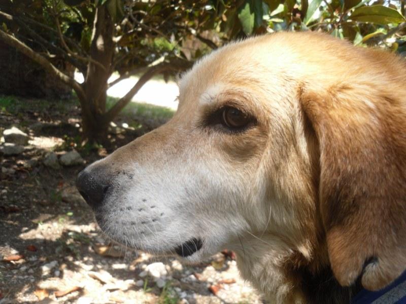 Hunde in Italien - ein ganzes Leben im Canile 15221941yg