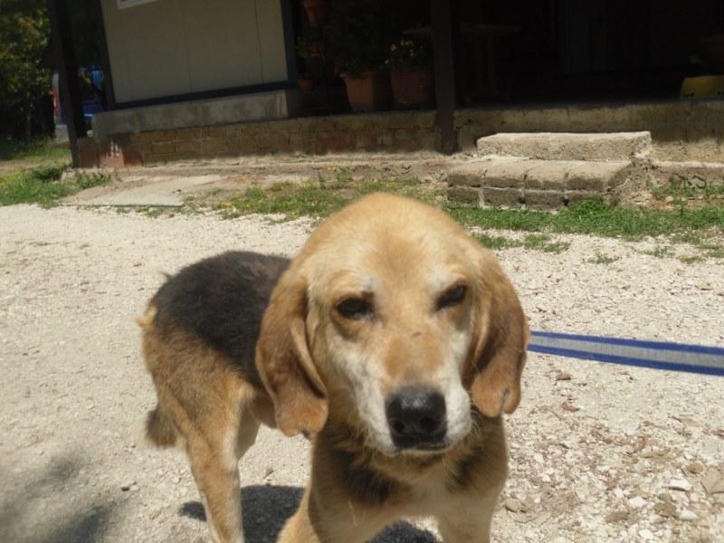 Hunde in Italien - ein ganzes Leben im Canile 15221943no