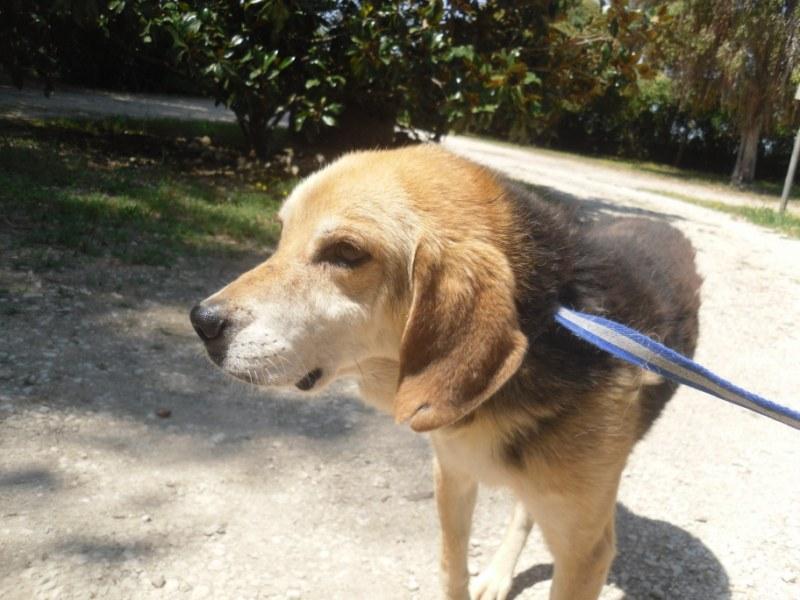 Hunde in Italien - ein ganzes Leben im Canile 15221946cd