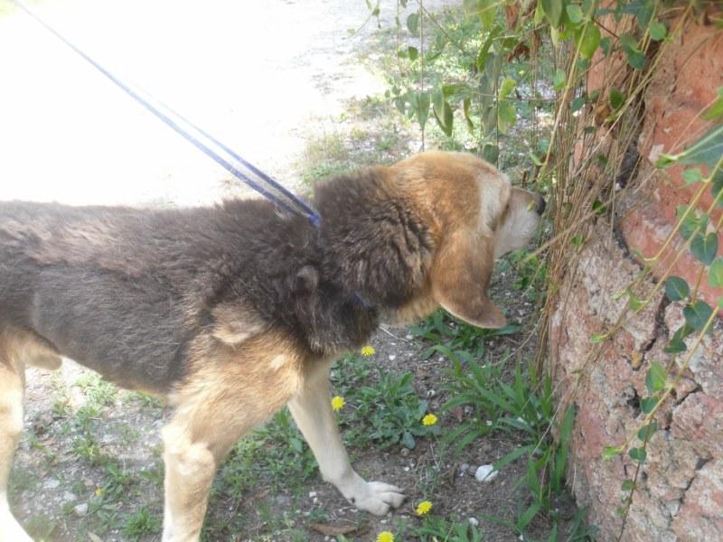Hunde in Italien - ein ganzes Leben im Canile 15221947ym