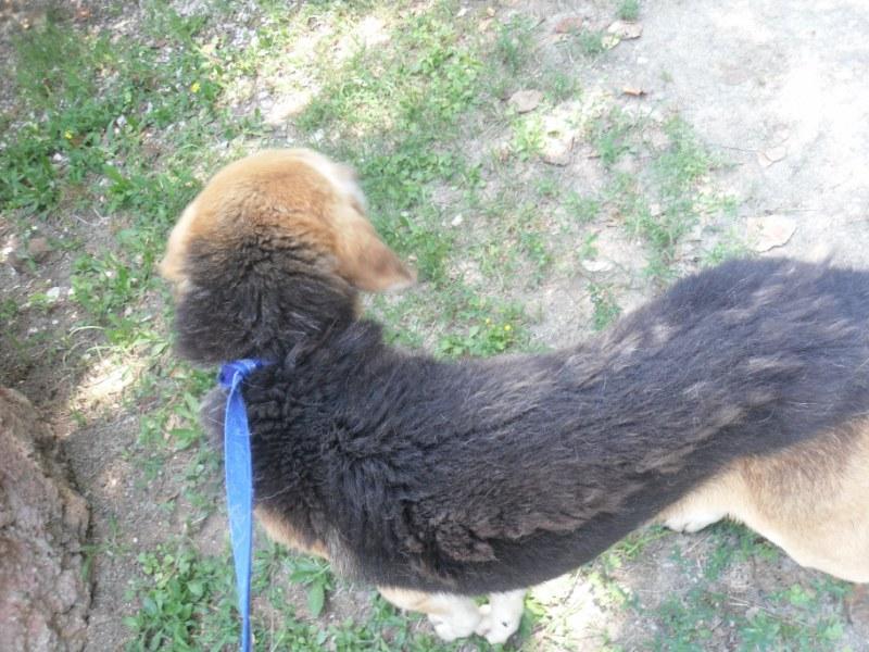 Hunde in Italien - ein ganzes Leben im Canile 15221949lg