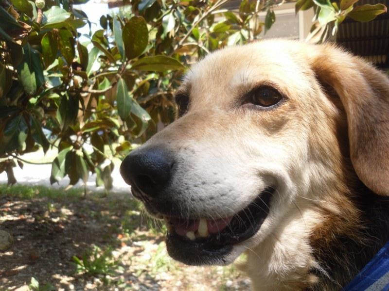 Hunde aus Italien suchen ein Zuhause!!! Ein ganzes Leben im Canile! 15221962yh