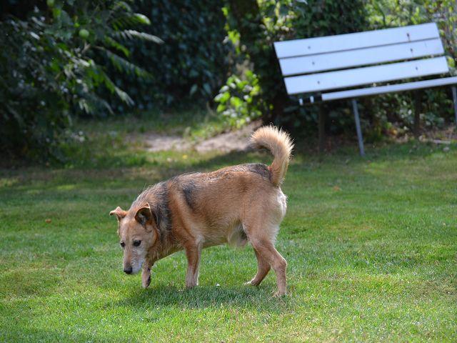 Jack - Hundeopa - Terrier - knapp 14 Jahre - Seite 2 15380551bc