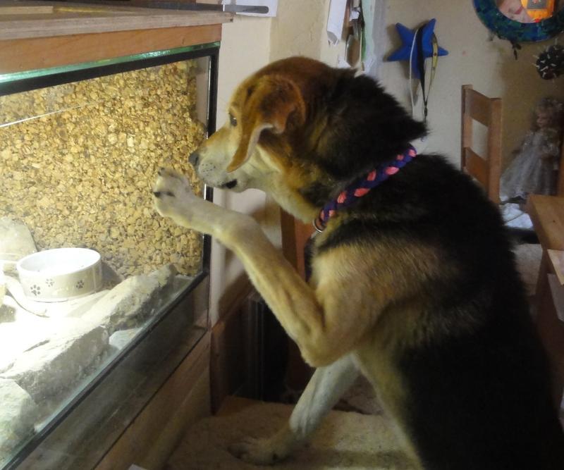 Hunde aus Italien suchen ein Zuhause!!! Ein ganzes Leben im Canile! - Seite 2 15441396av
