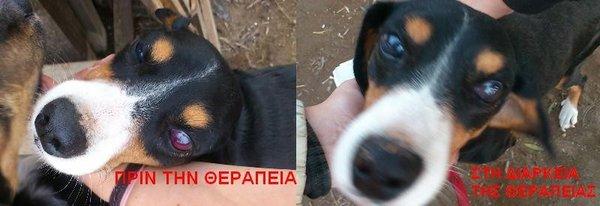 Bildertagebuch - Sinatra... Blinder Hund, na und? - in Griechenland ZUHAUSE GEFUNDEN!!! 15441664ub